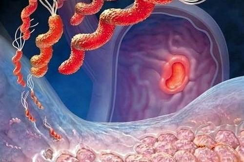 Употребление клубники снижает риск возникновения язвы желудка