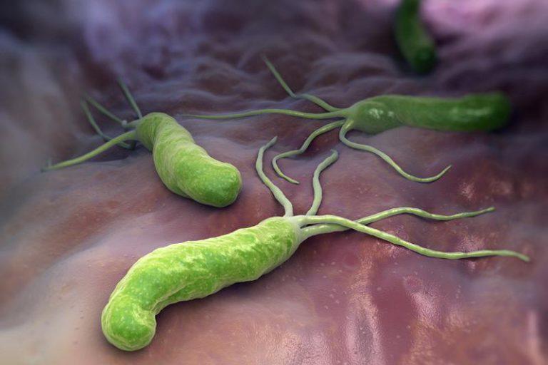 Обнаружен механизм выживания Helicobacter pylori в желудке