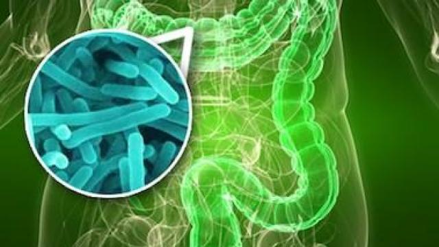Молочный жир портит микрофлору кишечника
