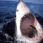 Акулы излечат геморрой