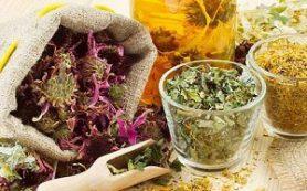 Язвенная болезнь: 10 травяных сборов для скорейшего заживления