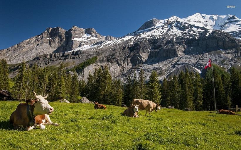 В Швейцарии выявлен случай заболевания сибирской язвой среди скота