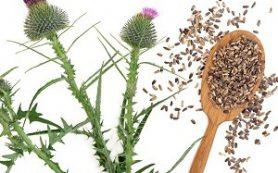 Натуральное ранозаживляющее и противовоспалительное средство, которое поможет при язве желудка