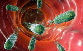 Бактерии кишечника защищают от камней в почках