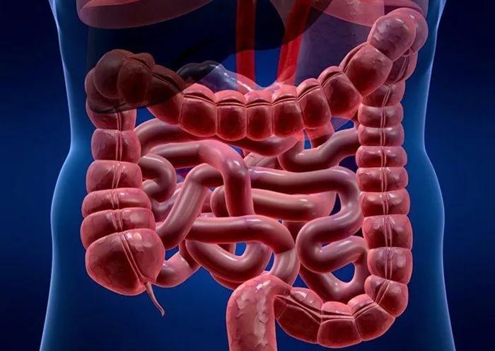 Заболевания внутренних органов: атония кишечника
