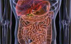 Эликсир молодости обнаружен в кишечнике