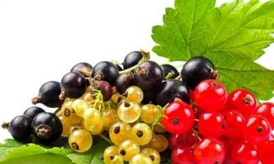 Врачи назвали самую полезную ягоду для здоровья кишечника