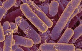 Кишечные бактерии могут влиять на возникновение тревожности