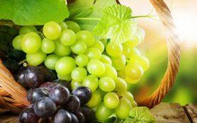 Виноградная диета против болезней ЖКТ