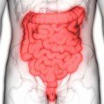 Специалисты успешно вырастили человеческий кишечник в лаборатории