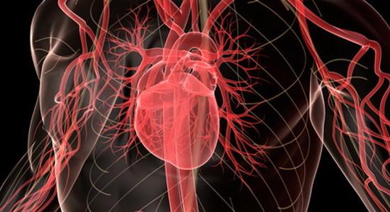 Влияние стресса для сердечно-сосудистую систему