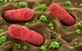 Избыток соли в рационе разрушает микрофлору кишечника