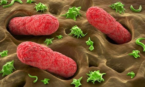 Бактерии регулируют движения кишечника