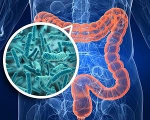 Бактерии кишечника способствуют его перистальтике