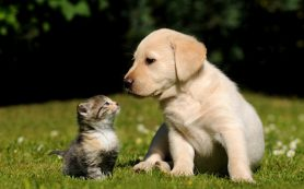 Собака или кошка в доме