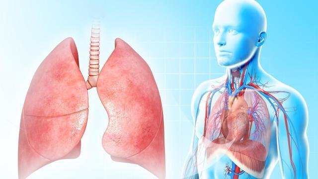 Плеврит. Дыхательная система. Симптомы