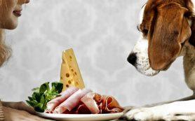 Кишечная микрофлора собак оказалась похожей на человеческую