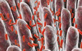 Бактерии кишечника умеют предсказывать цирроз