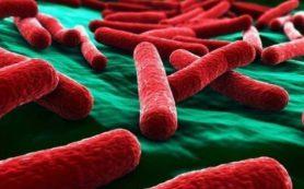 Кишечные бактерии могут предсказать риск госпитализации у пациентов с циррозом печени