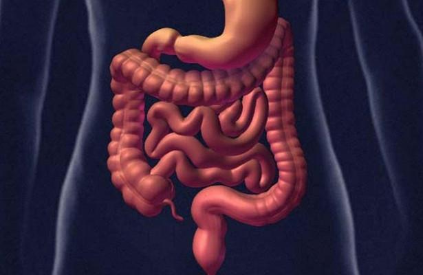 Как «думает» кишечник? Впервые изучены нейроны «второго мозга»