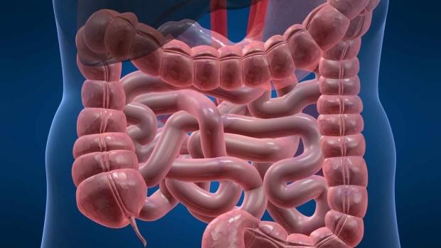 Колоноскопия – показания, противопоказания и подготовка к исследованию