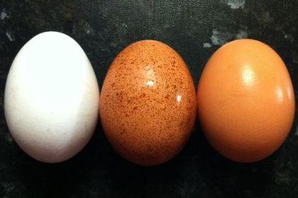 Ежедневное употребление яиц оказалось полезным