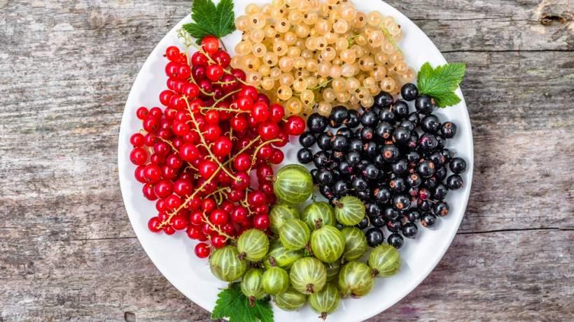 Медики назвали самую полезную ягоду для здоровья кишечника