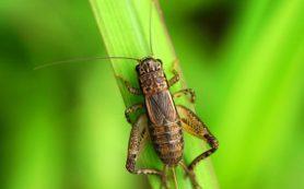 Употребление насекомых полезно для здоровья желудочно-кишечного тракта
