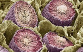 Вирус или бактерия: тактика имеет значение