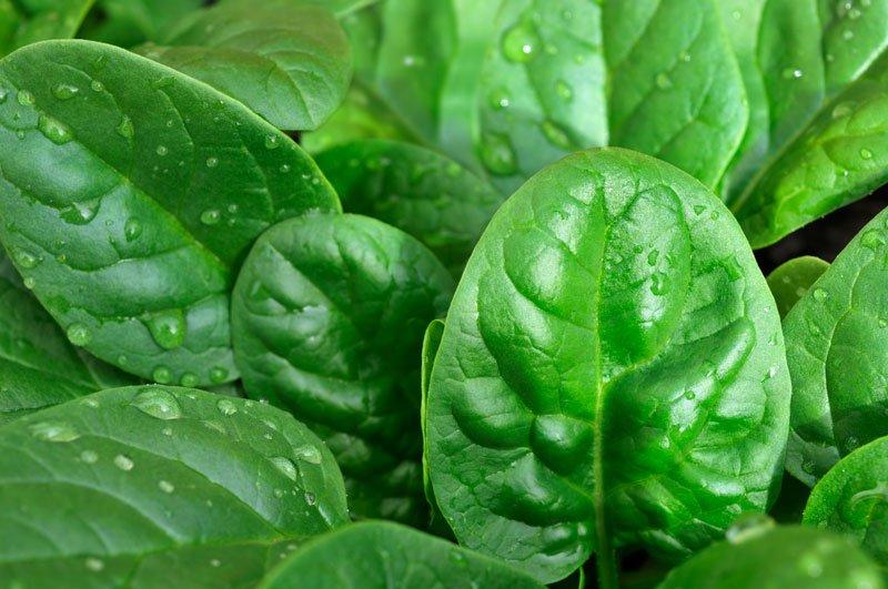 9 причин каждый день употреблять шпинат