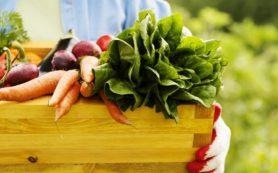 Продукты с фермерских рынков могут вызывать отравления
