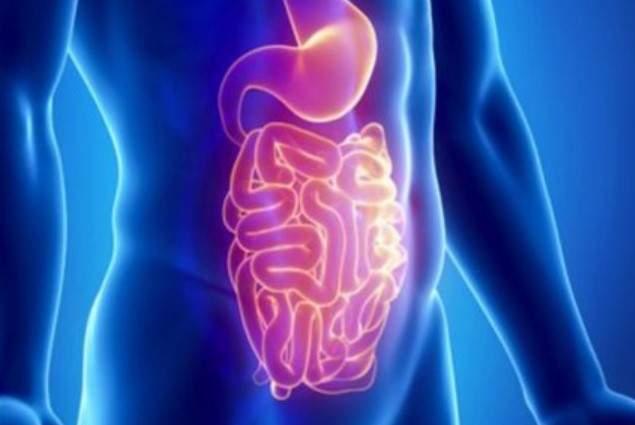 Названы главные продукты для здоровья кишечника