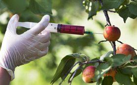 Вместо ГМО продукты питания подвергнут новой редактуре генов