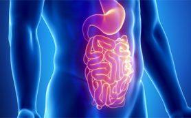 Очаровать кишечник: как подружиться со своей пищеварительной системой