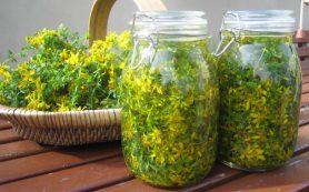 Очищение печени. Травы и лекарства для печени