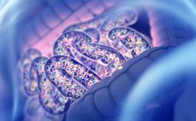 Найдена молекула, ответственная за баланс микрофлоры кишечника