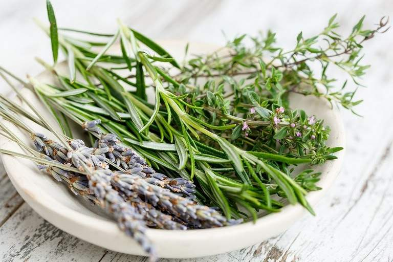 Эти травы помогут при расстройствах пищеварения