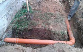 Корни деревьев в канализационных трубах — распространенная септическая проблема