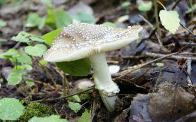Как избежать отравления токсичными грибами