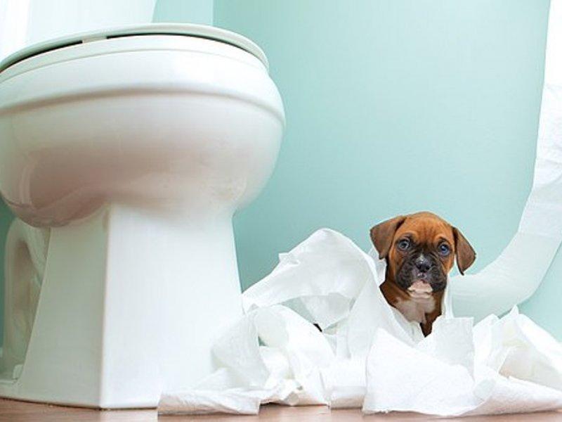 Владельцам домашних животных грозят проблемы с кишечником