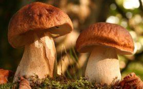 Как правильно есть грибы, чтобы не отравиться