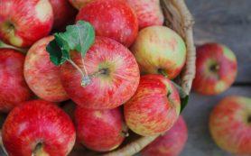 Медики рассказали, как яблоки влияют на кишечник