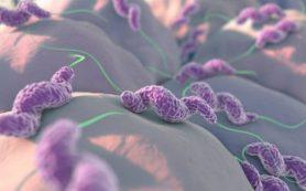 Микробиота в кишечнике ребенка влияет на развитие характера