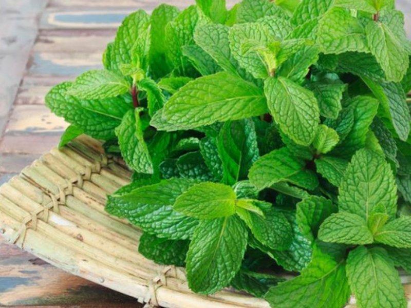 Врач Лариса Алексеева: какие травы помогают при спазмах в желудке?