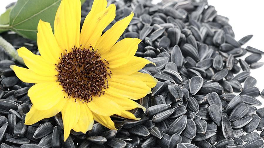 Диетолог рассказала о пользе и вреде жареных и сырых семечек