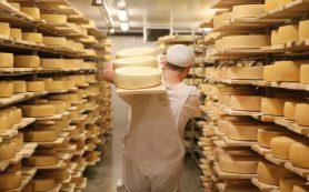 Врач назвала самые вредные сорта сыра