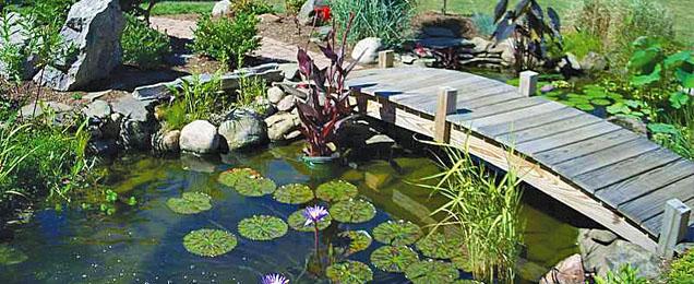 Проектирование водоемов на садовых участках, в городских садах и парках