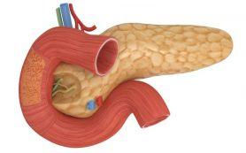 Какой образ жизни защищает поджелудочную железу, и что она разрушает