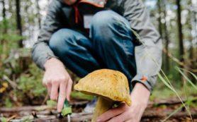 Роспотребнадзор рассказал как не отравится грибами