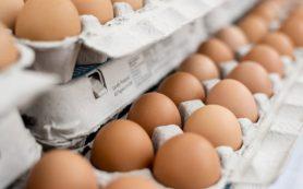 Эксперт рассказал, как лучше хранить и готовить яйца